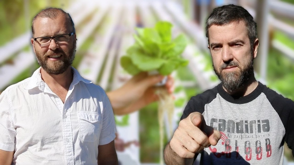The Government Does NOT Want You To Grow Your Own Food! Here's Why You Should And How!